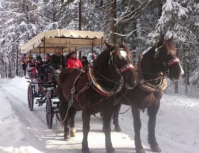 Carriage ride around the lake
